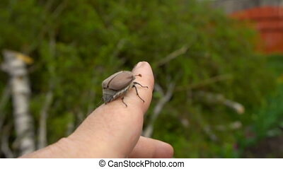 Maybug on the finger