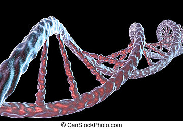 Double helix of DNA isolated on black background. 3D...
