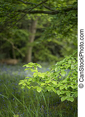 Lovely shallow depth of field fresh landscape of English...