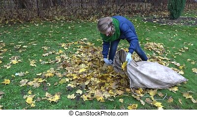 woman bring leaves into fabric bag in garden. Seasonal work....