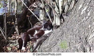 striped little kitten plays - Cat is dozing in the sun...