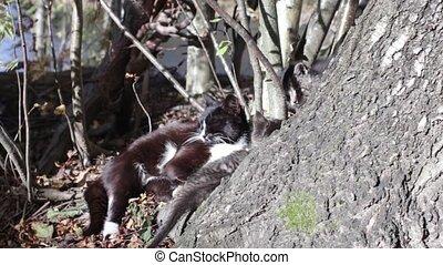 striped little kitten plays - Cat is dozing in the sun...