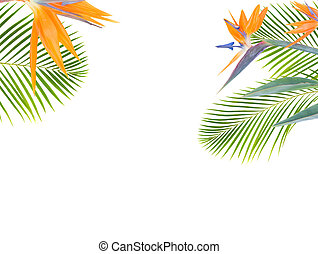 orange hibiscus flower - tropical flowers and leaves - resh...