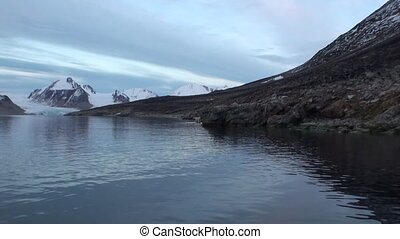 White sea bear is on the rocky shore in desolate of ice tundra of Svalbard.
