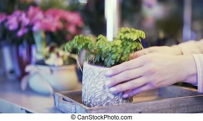 Florist shop saleswoman putting potted flowers on the counter to show, side view