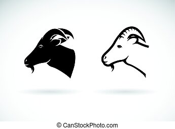 Vector of a goat head design on white background, Wild Animals.
