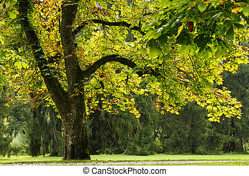 Travel to Salzburg, Austria. The view on the park with big trees in the sunny day.