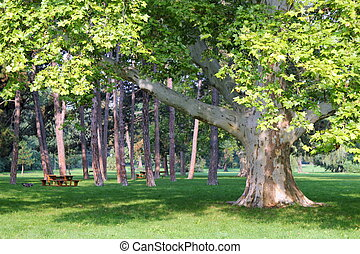 Travel to Vienna, Austria. The view on the park with big trees in the sunny day.
