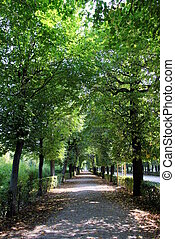 Travel to Vienna, Austria. The view on the park with big trees and a road in the autumn sunny day.