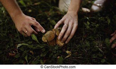 two edible mushroom in the grass - man and woman found two...