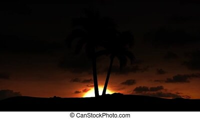 Beautiful sunrise with palm and clouds