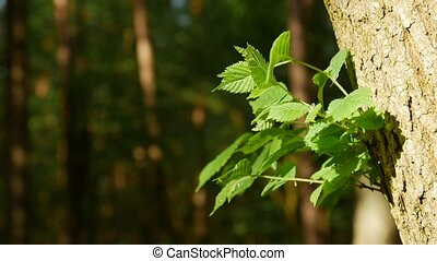 Close up of branch bright green young leaves. Camera locked...
