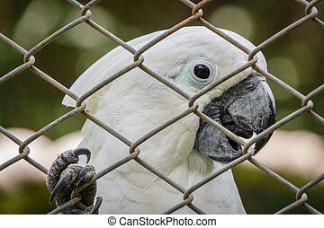 White parrot behind grille - Closeup view of white parrot...