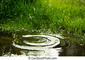Rain falling in the puddle and circles on the water from...