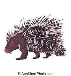 Vector Illustration Porcupine Isolated - Vector illustration...