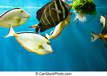 Beautiful colorful fish in the aquarium, Vietnam, photo for...