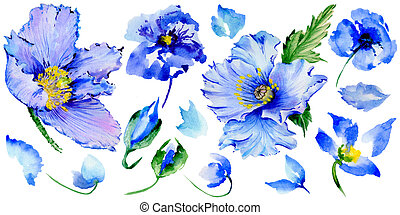 Wildflower poppy flower in a watercolor style isolated. Full...