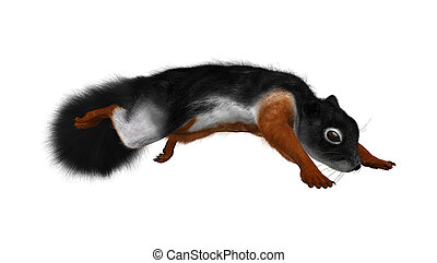 3D Rendering Prevost Squirrel on White - 3D rendering of a...
