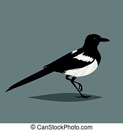 Realistic bird Magpie isolated on a grey background. One of...