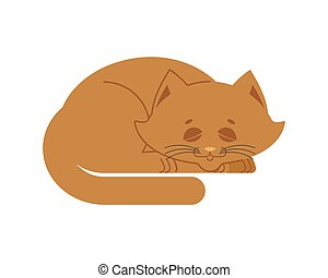 Sleeping cat brown isolated. kitten be asleep. sleep pet