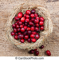 Nest of cranberries