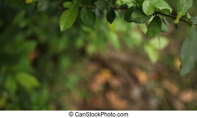 Natural background with fresh green leaves. Lumpini park,...