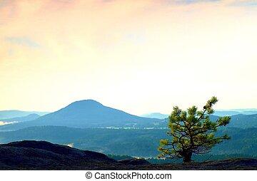 Wild bonsai of pine on sandstone rocks. Blue mist in valley...