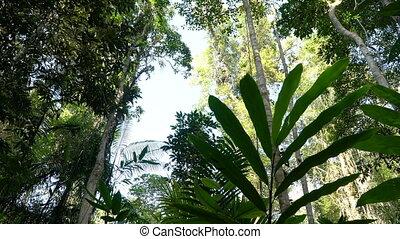 Giant leaves at Khao Yai national park - Slider video of...