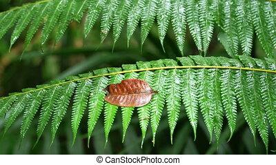 fern leaves at Khao Yai national park - Slider video of fern...
