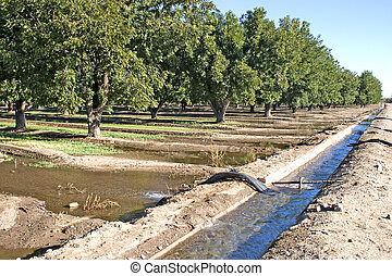 Pecan Orchard, Green Valley, AZ - Pecan Orchard, Green...