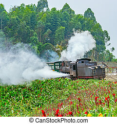 Steam narrow-gauge train. - Steam narrow-gauge train with...