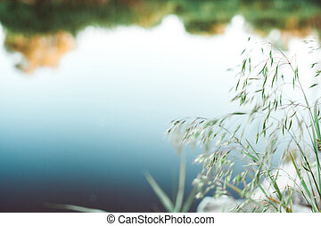 Green grass on background of river - Green grass on the...