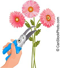 Pruner in the hand. Cut flowers. Isolated on white...