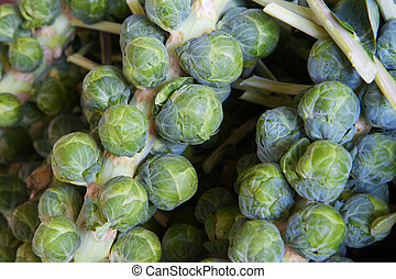 Brussel sprout stalks - Macro of several green brussle...