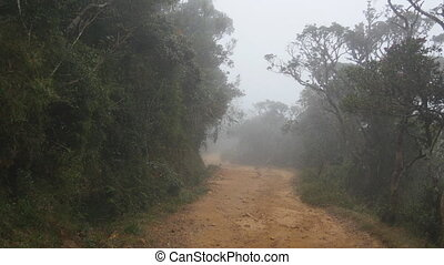 Moving along mountain path among tropical forest. Point of...