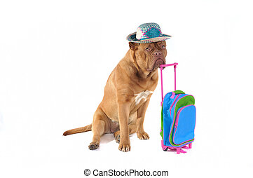 Dog and Suitcase - Dog is Ready to go on a holiday trip