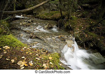 Stream in Robson Valley - A beautiful stream surrounds by a...