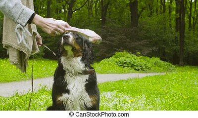 Young woman giving a bone to a dog - Dog's birthday party....