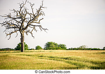 old dead tree on the farm early morning