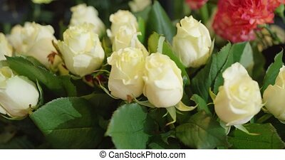 White roses in close-up - Close-up shot of fresh roses of...