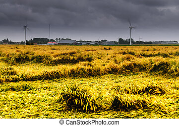 Summer Storm over Friesland