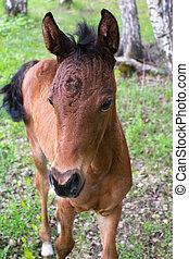 A little curious foal