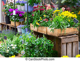 show-case of flower shop - flowers at the show-case of urban...
