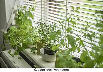 binnen, gevarieerd, planten