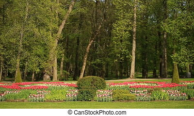 Flowerbed of many fresh red, white and pink tulips flowers in city park. Against the background of trees and greens