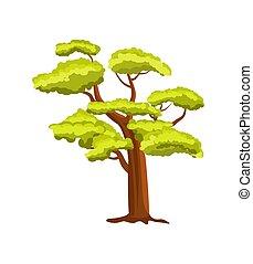 Beech green tree vector icon