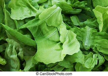 Close up lechuga - Close up hojas de lechuga francesa