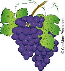 Purple grapes with green leaves isolated on white background