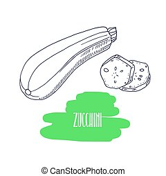 Hand drawn zucchini isolated on white. Sketch style...