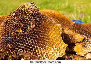 Bienen, Honig wabe, Honigwabe, imker, Honig, wild,...